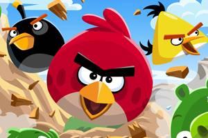 Un oiseau rouge pas content